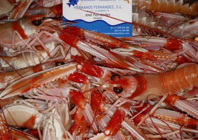 Nuestro marisco fresco - Marisquería Poniente